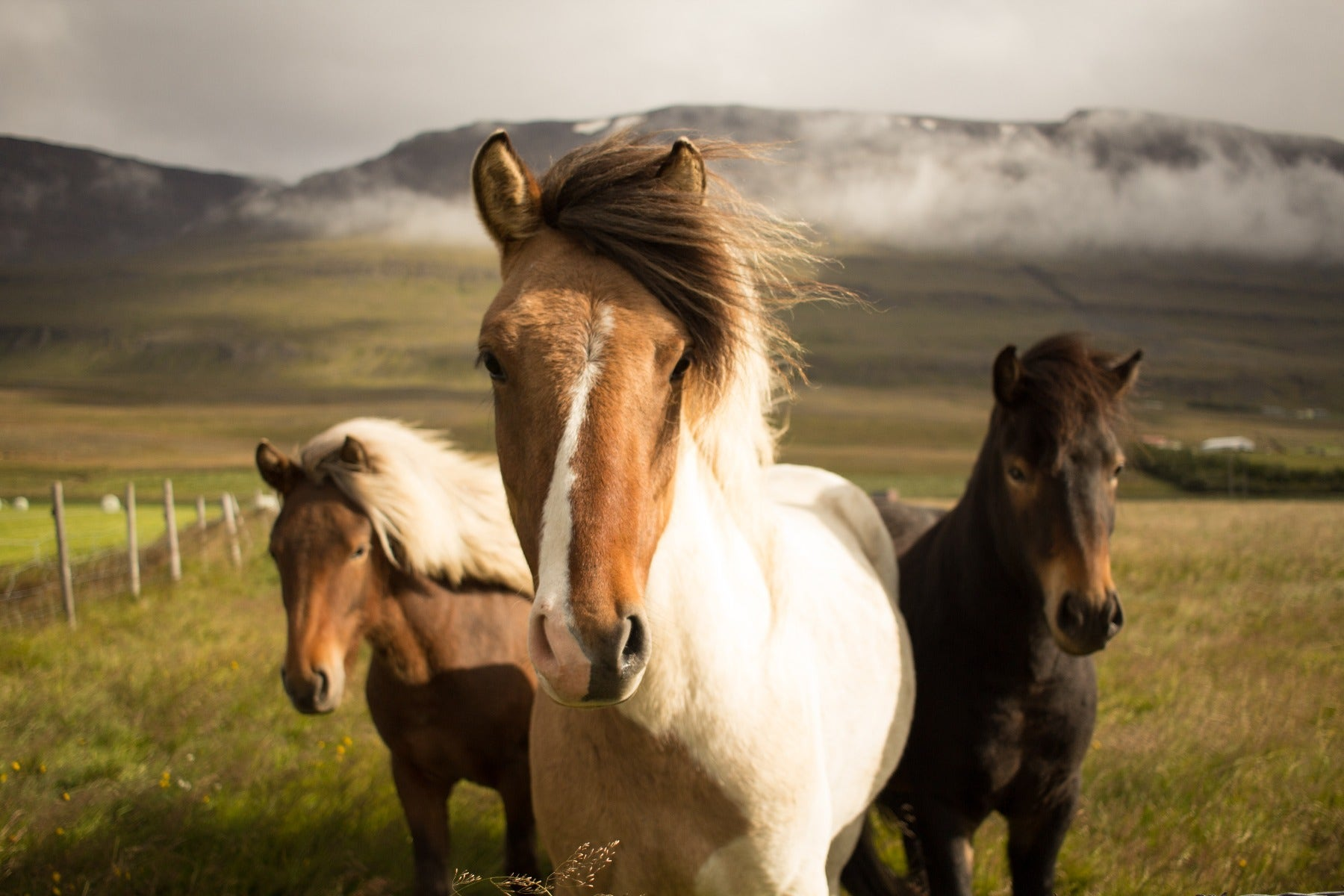 Horses with a Wide Angle Lens