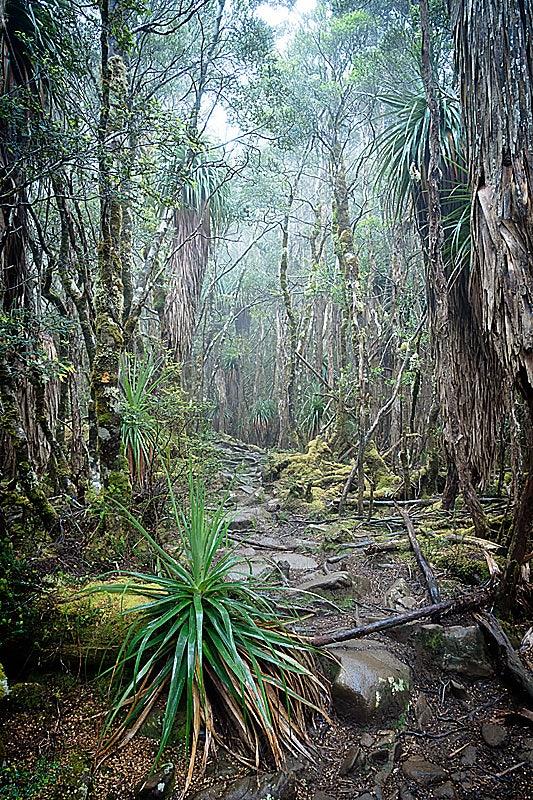 Overland Track in Tasmania
