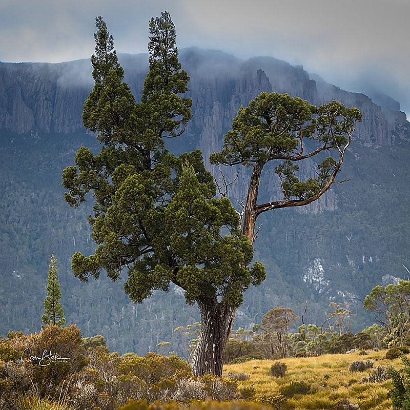 Pencil Pine Hike in Cradle Mountain