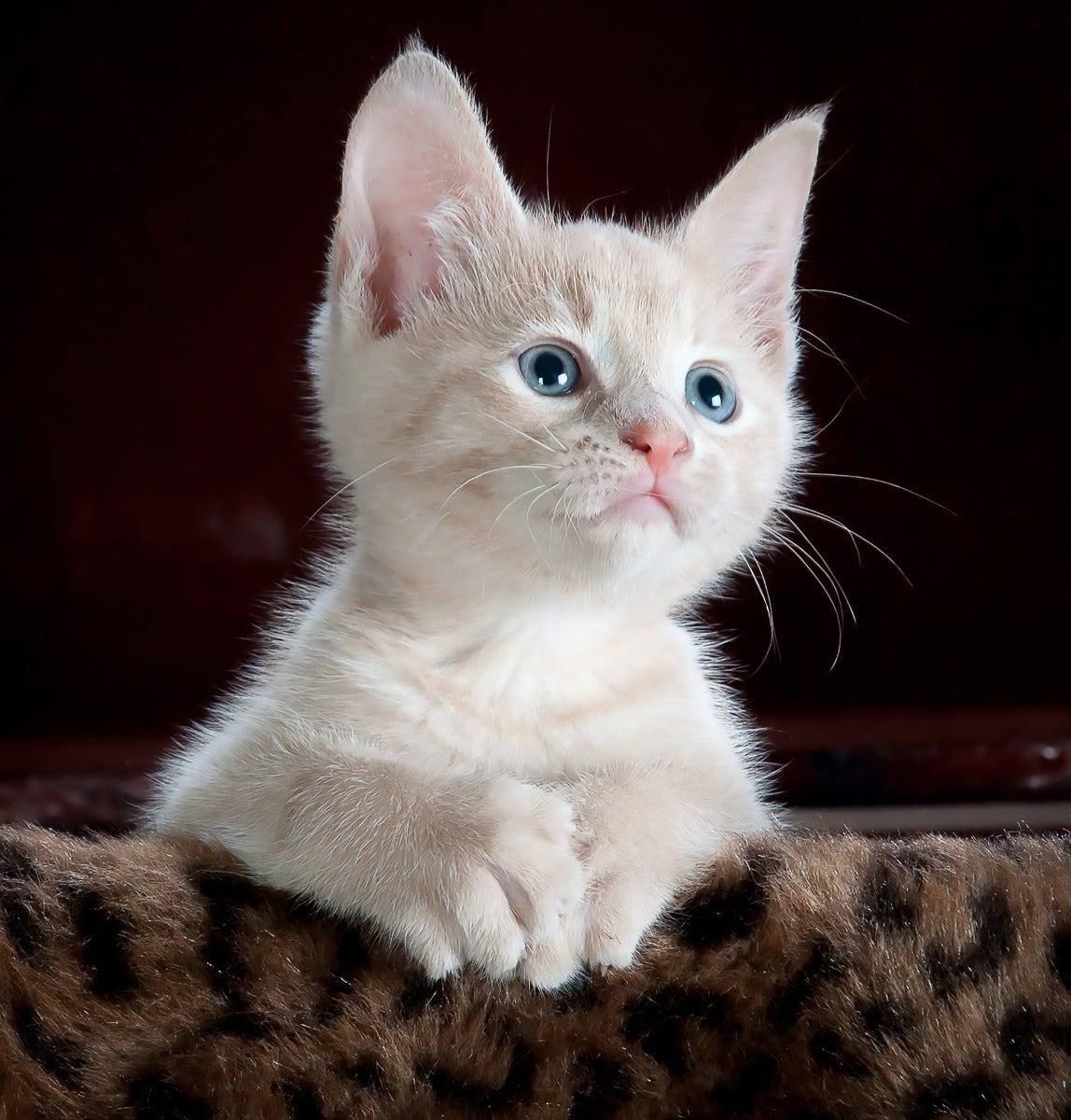 Flash photo of kitten