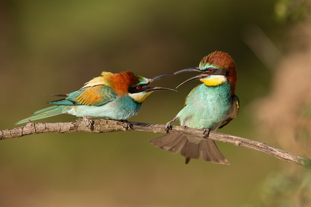 Birds interacting on a branch