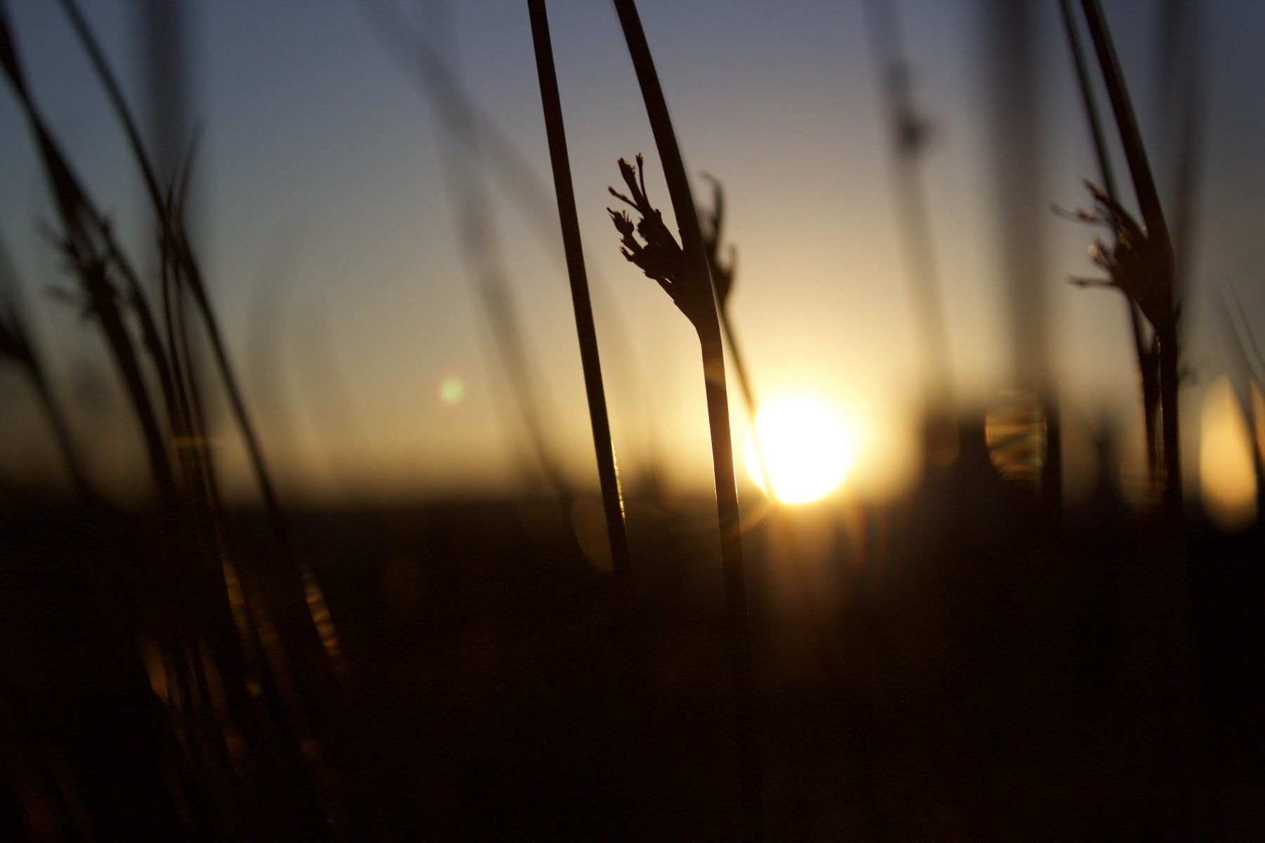 Backlit plant in a field