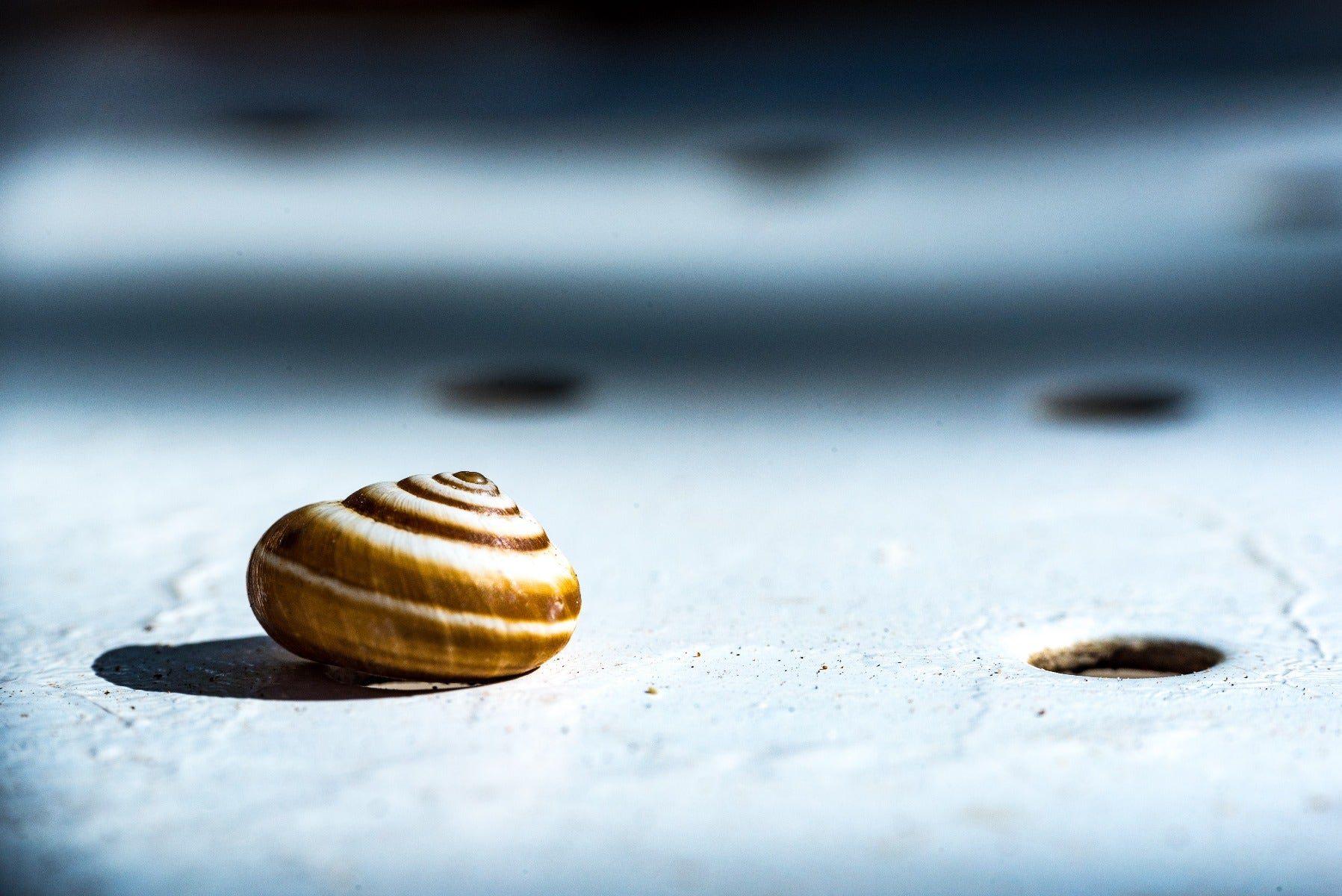 Snail with harsh lighting
