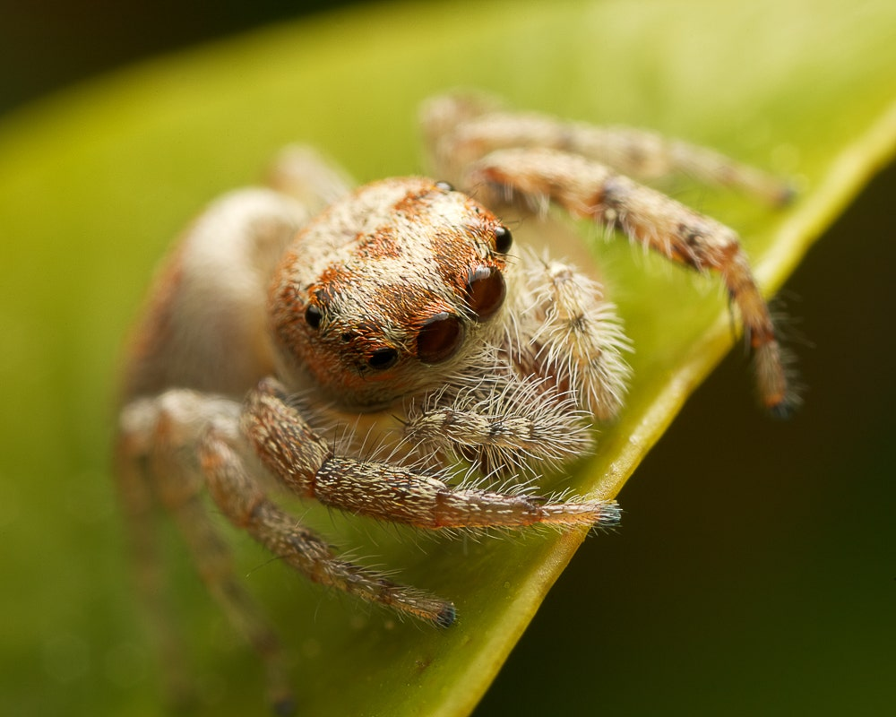 Macro image of spider on a leaf