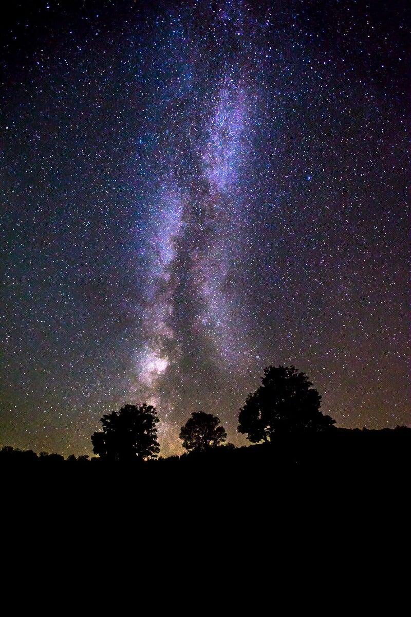 The Milky Way galaxy behind trees